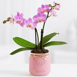 画像1: Pink Mini Orchid