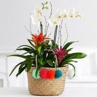 Premium Orchid Garden