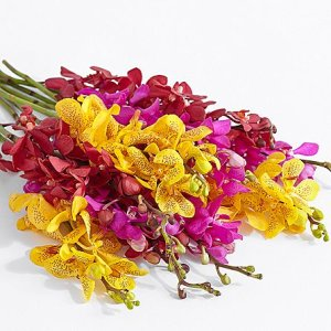 画像2: Mokara Orchids