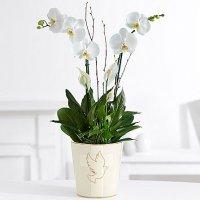 Deluxe White Orchid Garden