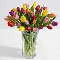 30 Multi-Colored Birthday Tulips