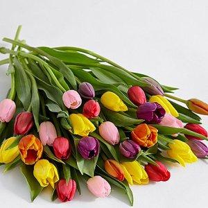 画像2: 30 Multi-Colored Tulips