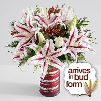 Premium Candy Cane Lilies
