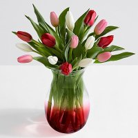 15 Sweetheart Tulips