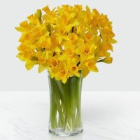 Striking Gold Daffodil Bouquet with Vase